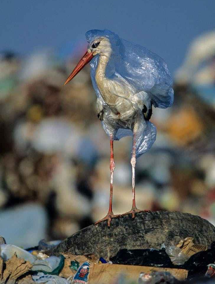 plastic-waste-single-use-worldwide-consumption-animals-4.adapt.676.1