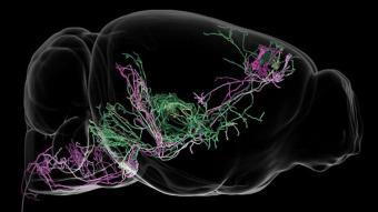 behavior-brain-circuit-neurosciencenews